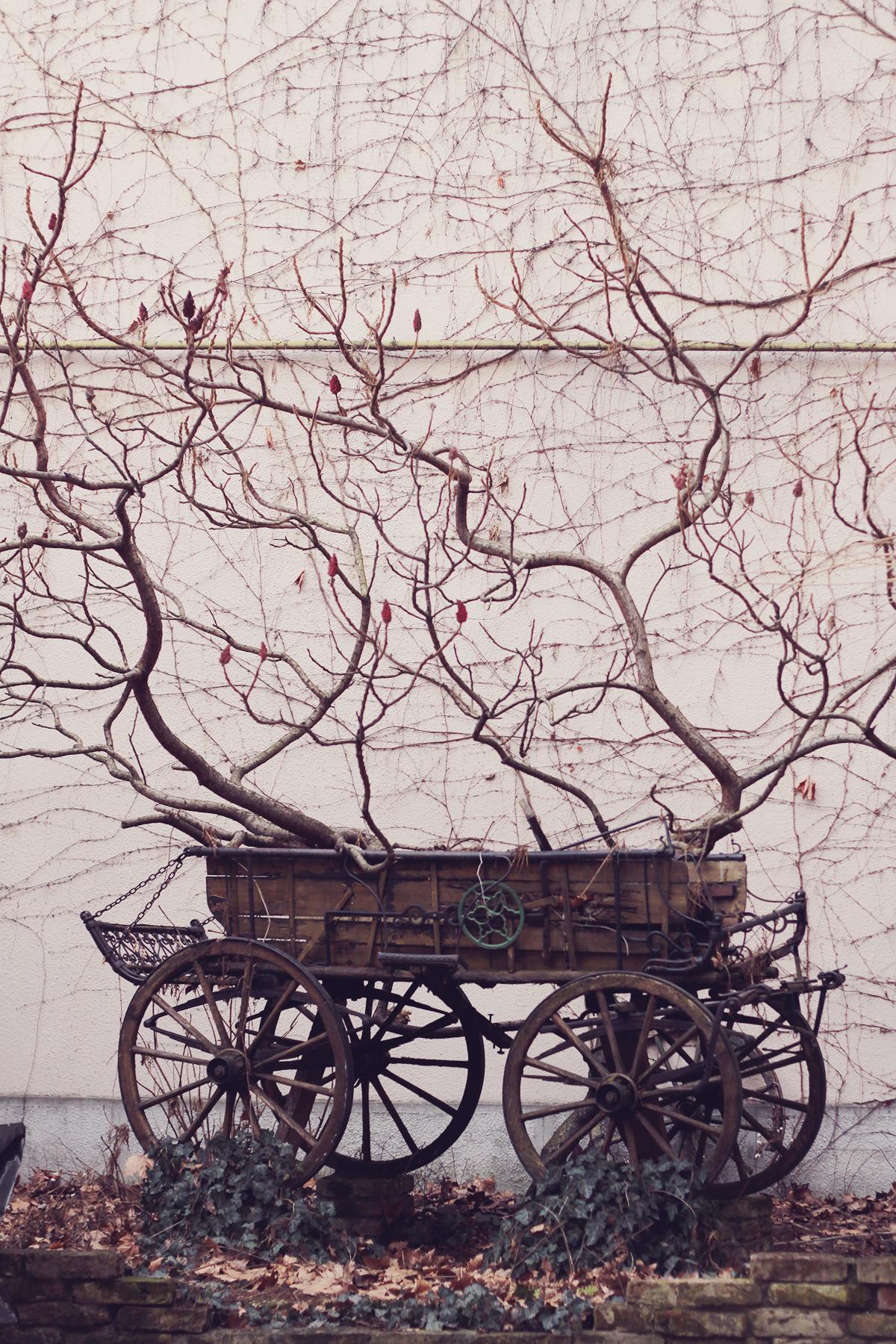 tree and carriage - szeged hungary