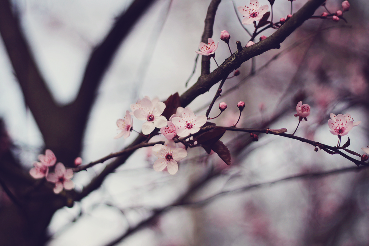 pretty pink bloooms