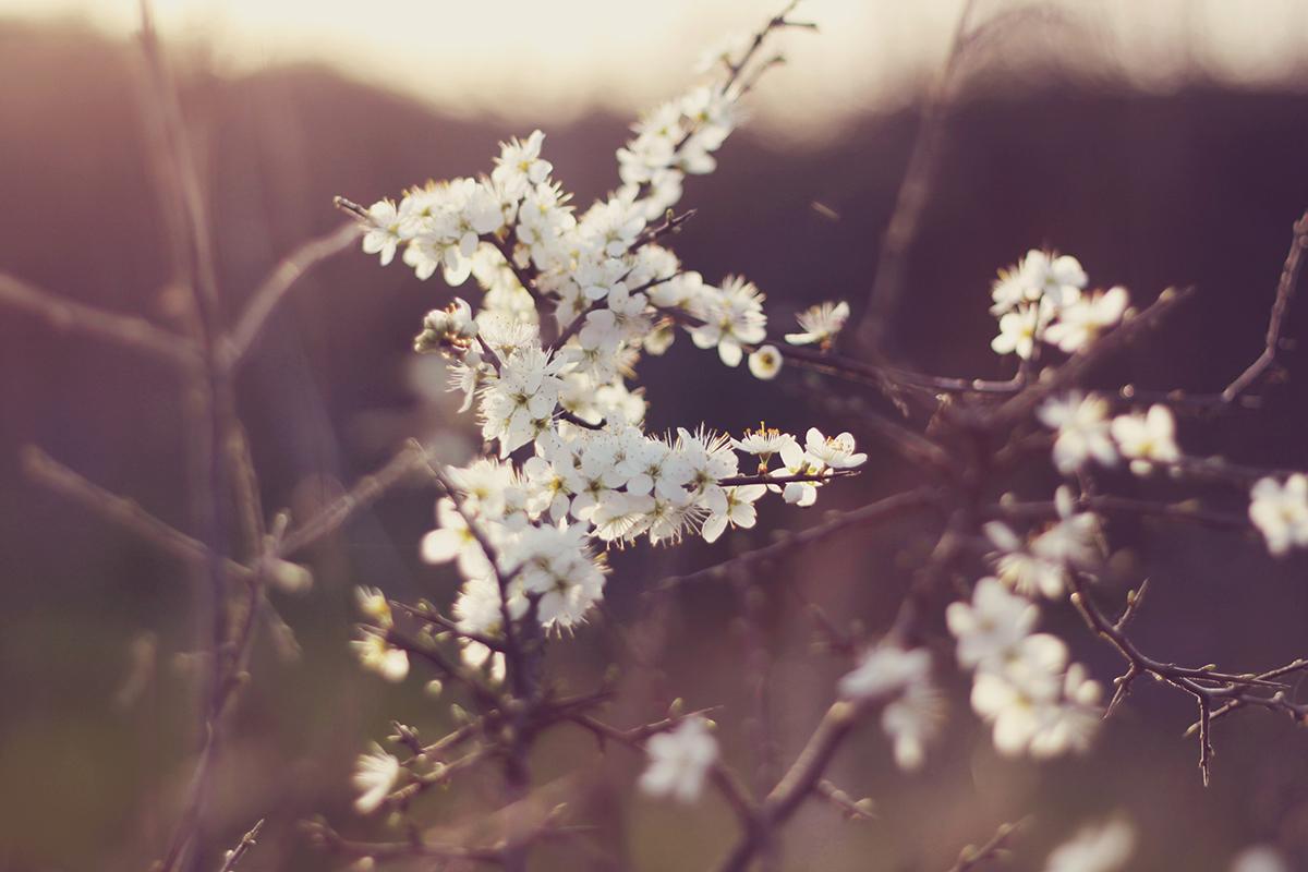 spring little white flowers