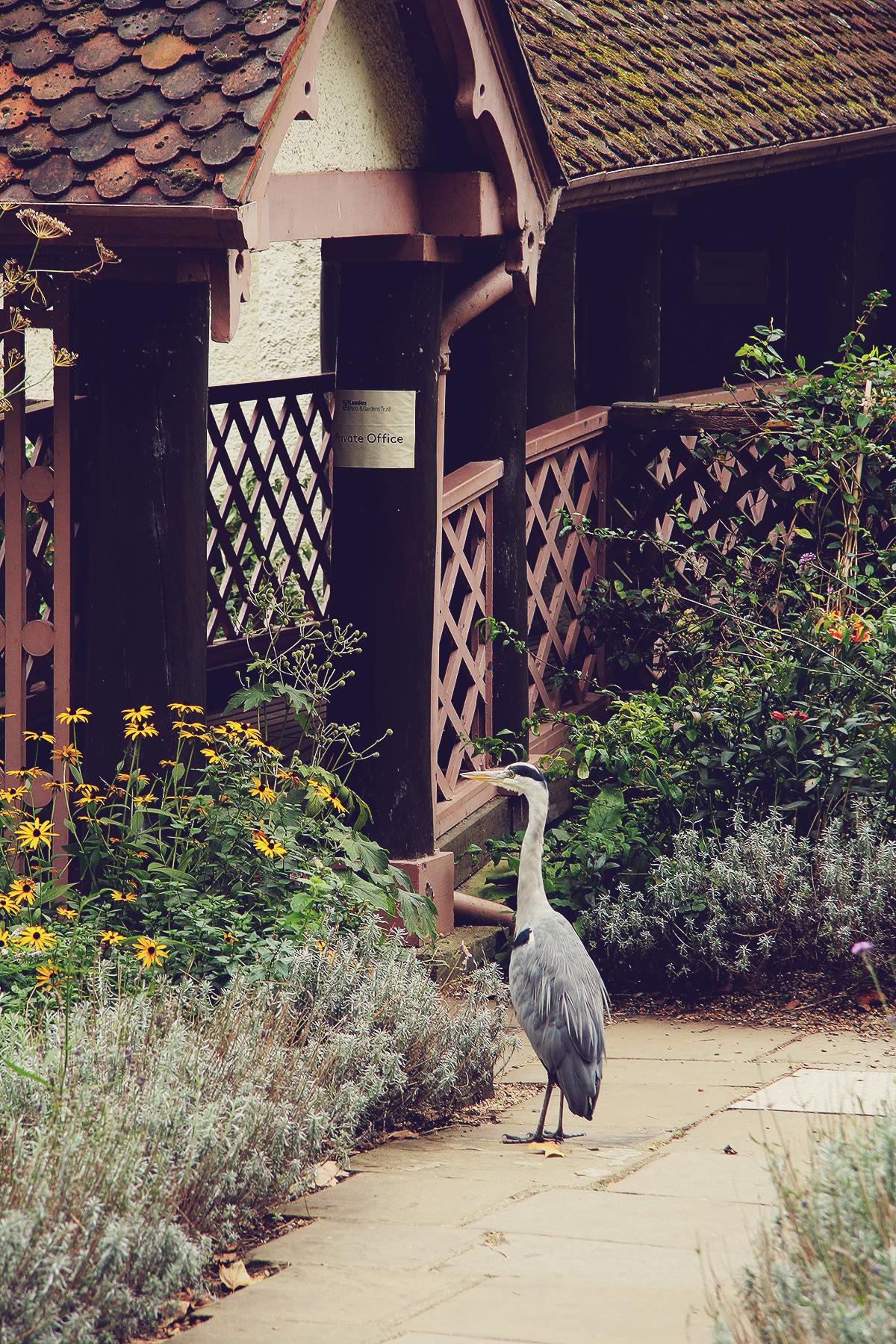 london-big-bird-in-st-jamess-park