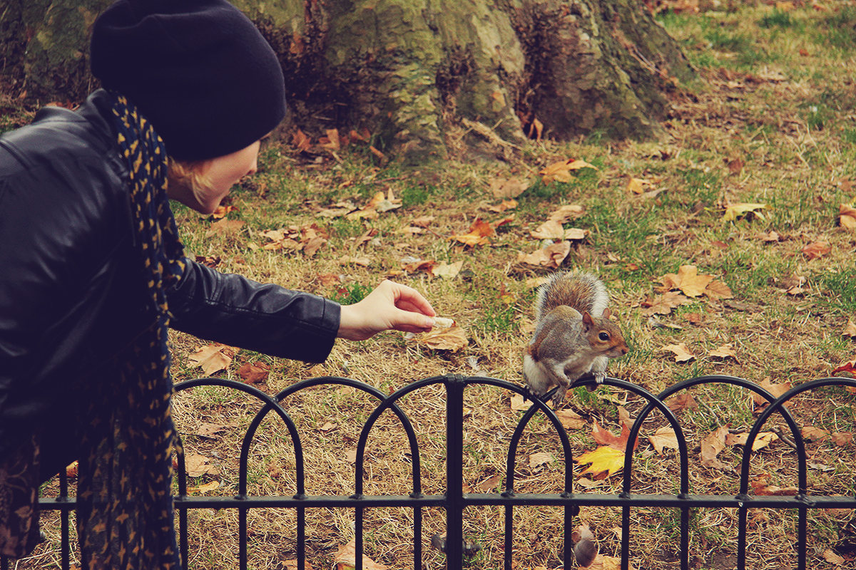 london-squirel-in-st-jamess-park