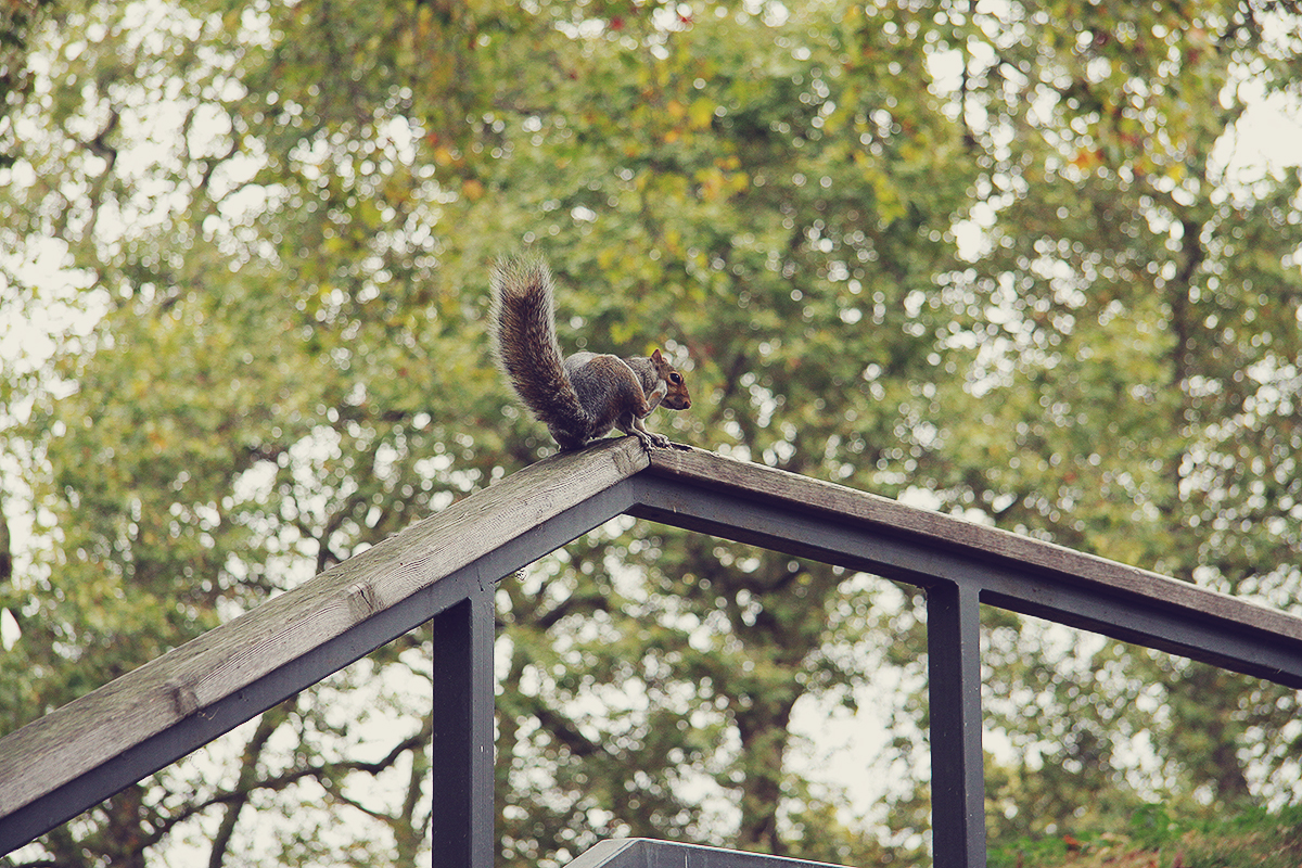 london-squirel
