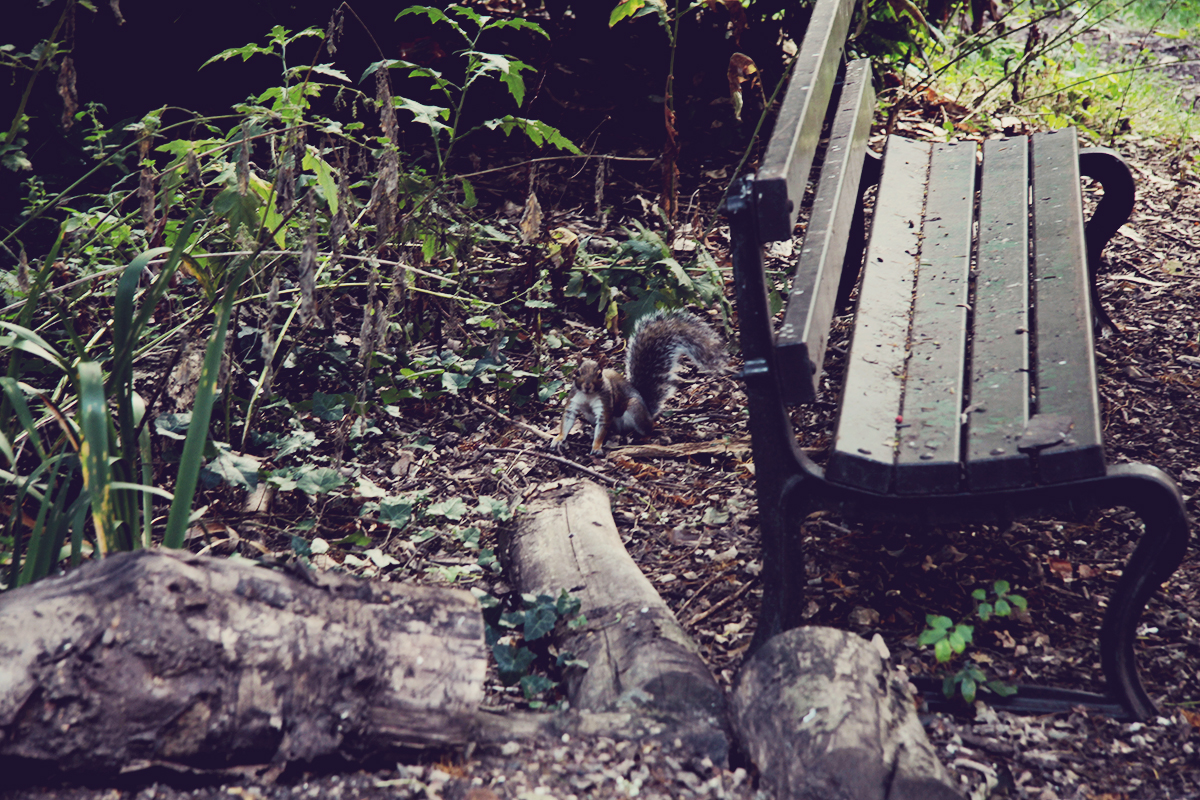 london-squirrel