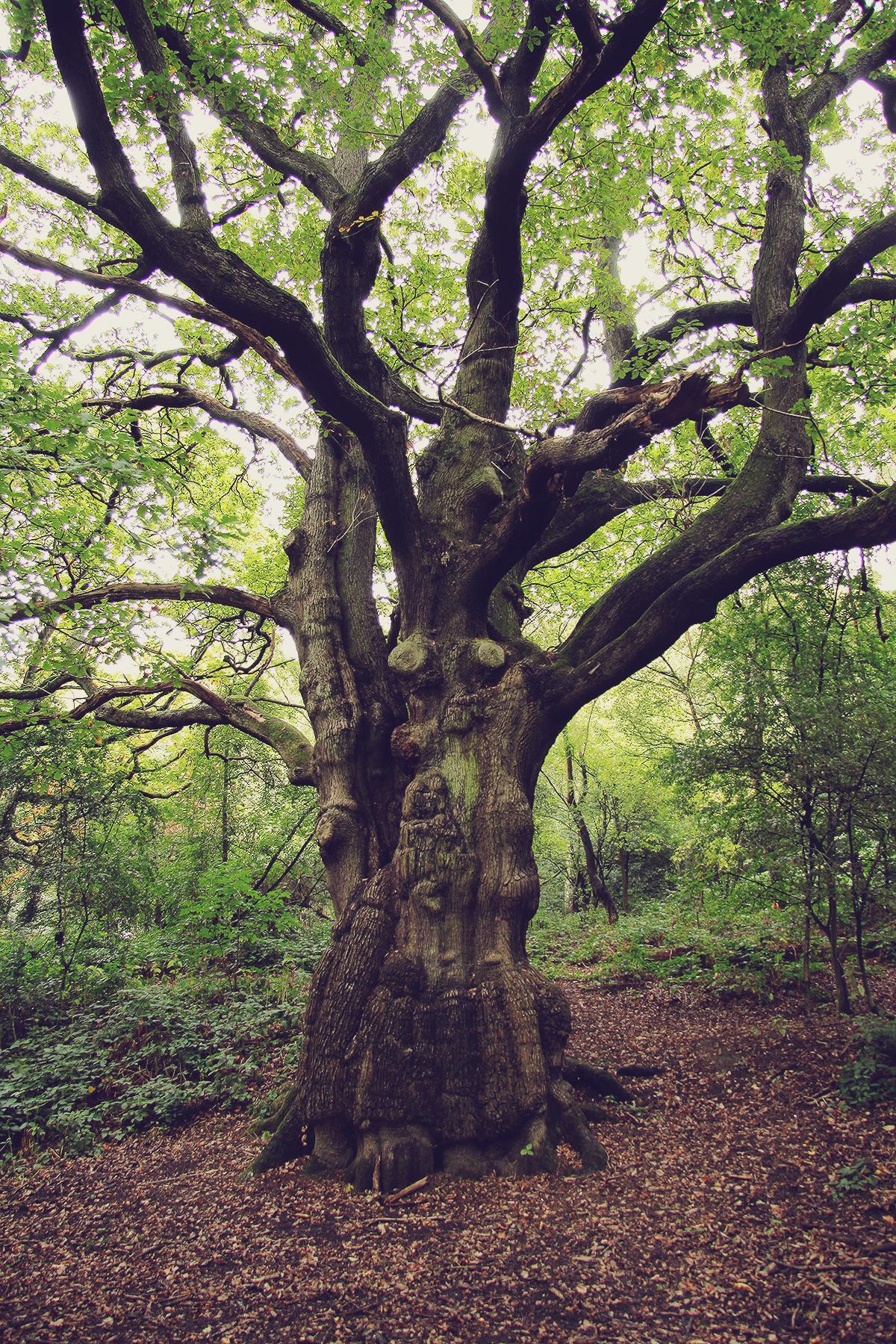 london-tree-in-hampstead-heath
