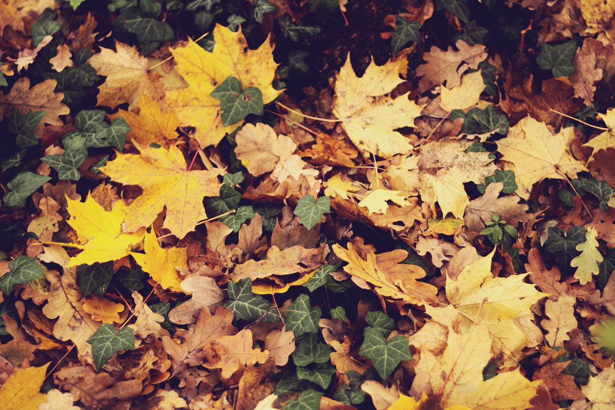 carpet-of-autumn-leafs