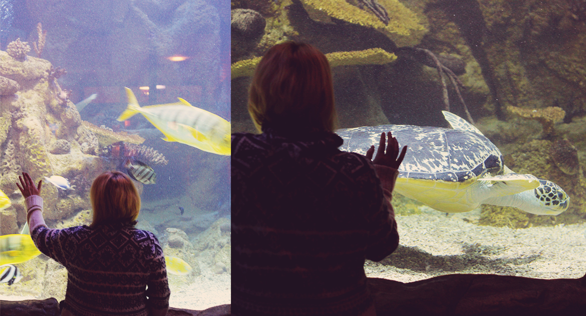 Vienna, travel, Haus des Meeres, winter fashion, things to see in Vienna, big tank of fish, big turtle