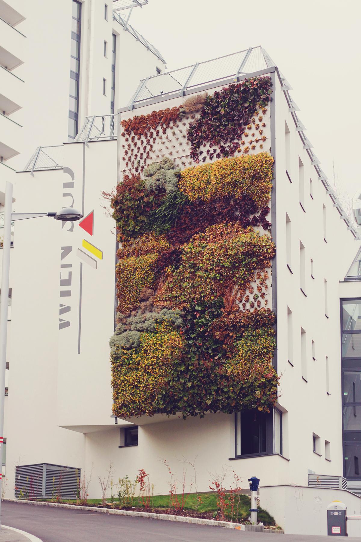Vienna, travel, white building, plants